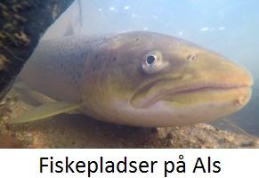 fiskepladserals