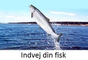 indvejdinfisk