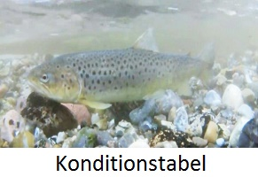 konditionstabel